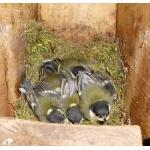 Vogelschutz.jpg